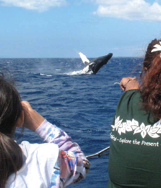 Mauis-Humpback-Whales